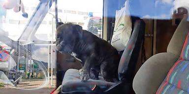 Drama um Hunde-Rettung aus Wohnmobil