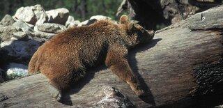 Tierpark Haag_wetterpartner.jpg