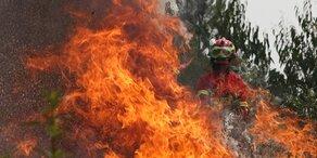 In Portugal wüten gleich fünf große Waldbrände