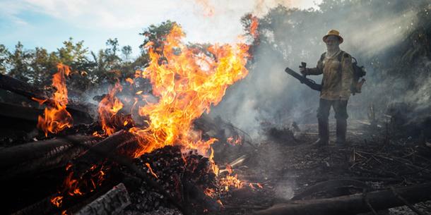Waldvernichtung in Brasilien in einem Jahr fast verdoppelt