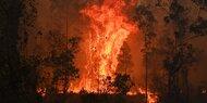 Tote bei Höllen-Feuer in Australien
