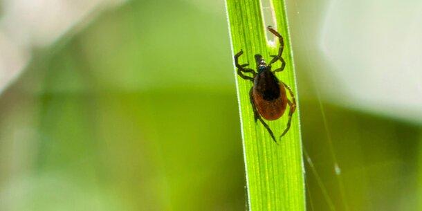 Gefahr: Zecken und Pollen-Alarm