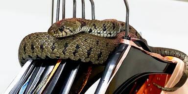 Hohenems Schlange in Kleidergeschäft