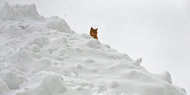 Höchste Lawinenwarnstufe Jetzt Kommen Noch 3 Meter Schnee