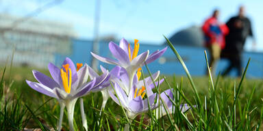 Frühling Krokus März