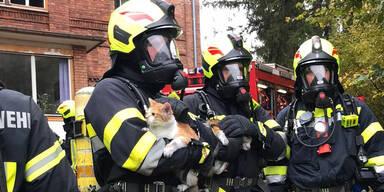 Feuerwehr rettete Katzen aus brennender Wohnung
