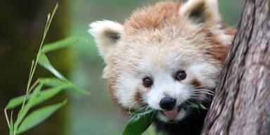 Alles voll: Besucher stürmten Salzburger Zoo