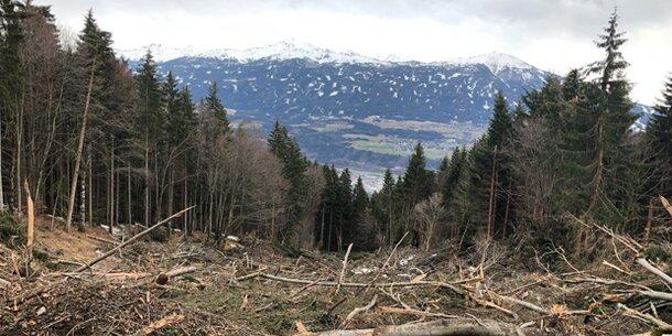 Nach Unwetter: 700.000 Festmeter Schadholz in Tirols Wäldern