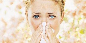 Ragweed-Pollen: Belastung hoch wie nie