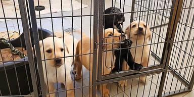 17 Hunde-Welpen vor Tiermafia gerettet