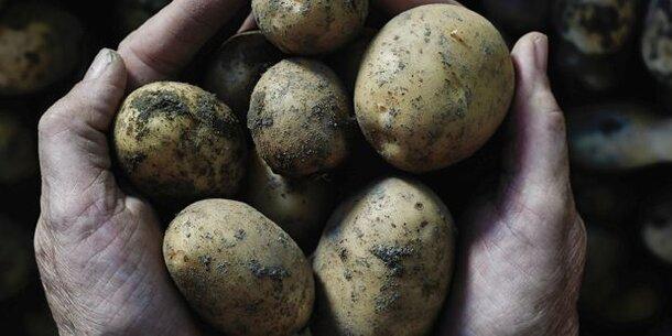 Kartoffel-Katastrophe: Uns gehen die Erdäpfel aus