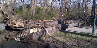 Umgestürzter Baum Stadtpark