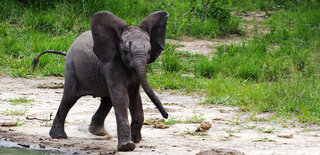 Babyelefant.jpg