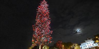 Jetzt leuchtet auch der Christbaum am Wiener Rathausplatz