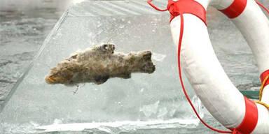 Fisch eingefroren