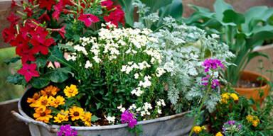 Gartentipps-Juni.jpg