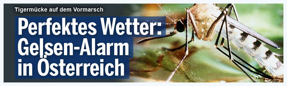 Perfektes Wetter: Gelsen-Alarm in Österreich