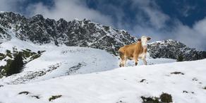 Schneefallgrenze sinkt auf 500 Meter