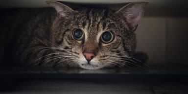 War der Katzenhäuter nahe Graz wieder am Werk?