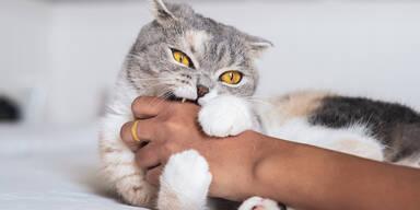 Katze weckte Besitzer und verhinderte Küchenbrand