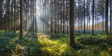 Oberösterreich Wald