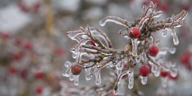 Gefrorene Beeren Winter Eingefroren Kälte