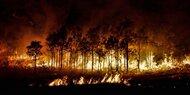 Waldbrand auf Gran Canaria - Menschen kehren in Häuser zurück