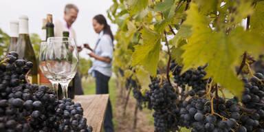 Wein Weinreben Weinernte Winzer