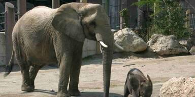 GettyImages-471066205_Elefant.jpg