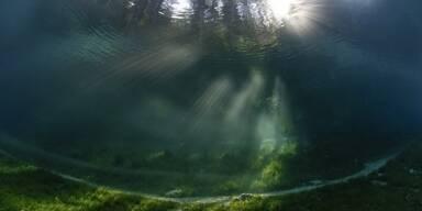 Unterwasserwelt Grüner See