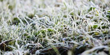 Bodenfrost Tau