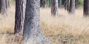 Dürre gefährdet unsere Bäume