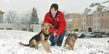 Winter Schnee Hunde Wien