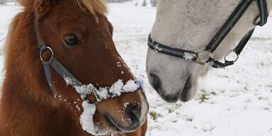 So verschneit ist Österreich: Salzkammergut