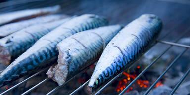 Griller Fisch Makrele Quecksilber