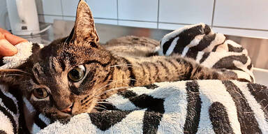 Besitzer lässt gelähmte Katze ''Titania'' im Stich
