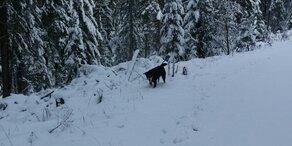 Alle Bilder: Hier liegt schon Schnee