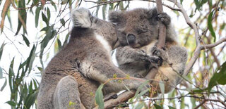 Kangaroo Island Odysseys3.jpg