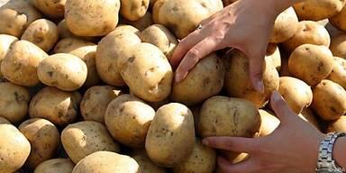 Kartoffeln vertragen keine Sonnenlicht