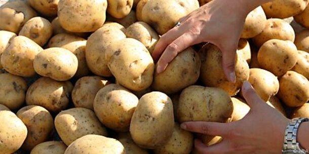 Alarm: Kartoffel-Lagerbestände gehen zu Ende