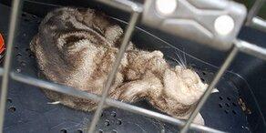 Erdbeben-Katze nach zwei Monaten lebend geborgen