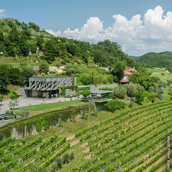 Kroatien - ADV - EG1 - Wein_Weinberge - Bild 3