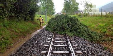 Pinzgauer Lokalbahn Baum