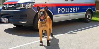 Polizeihund Pfotenschutz