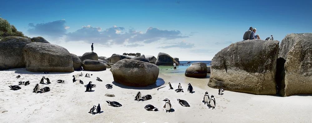Südafrika - ADV - Kapstadt - Pinguine
