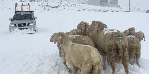 Winterwonderland in Österreich: Hier schneit es jetzt