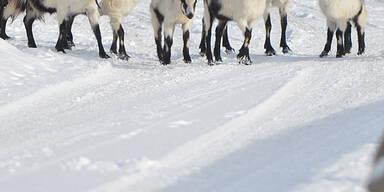 Schnee_APA2.jpg