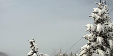 SchneelastBäume.jpg