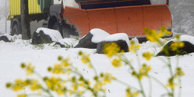 Schneepflug.jpg