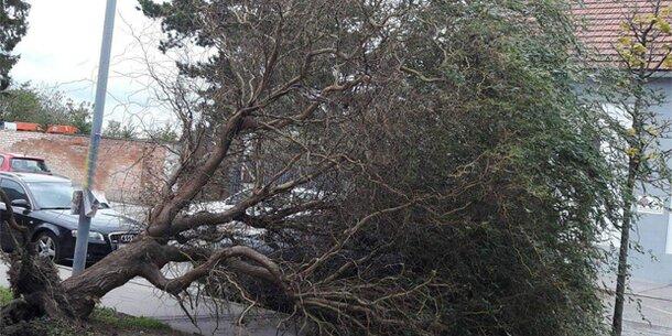 Sturm fegte über Österreich: Helfer im Dauereinsatz